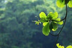 Εμπορικό σήμα του πράσινου δέντρου Στοκ φωτογραφίες με δικαίωμα ελεύθερης χρήσης