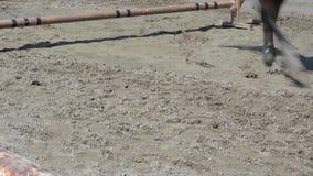 Εμπόδια εκσκαφέων αλόγων απόθεμα βίντεο