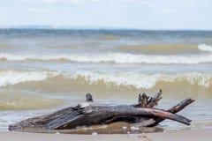Εμπλοκή στην παραλία Στοκ φωτογραφία με δικαίωμα ελεύθερης χρήσης