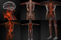 λεμφατικό σύστημα Στοκ εικόνες με δικαίωμα ελεύθερης χρήσης