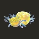 λεμόνια φύλλων Στοκ Εικόνες