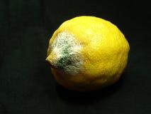 λεμόνι σάπιο Στοκ Φωτογραφίες