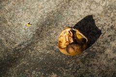 λεμόνι σάπιο Στοκ Εικόνες
