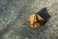 λεμόνι σάπιο Στοκ φωτογραφία με δικαίωμα ελεύθερης χρήσης