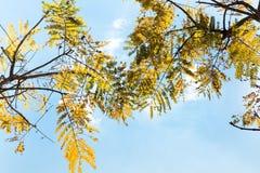 ενάντια ανασκόπησης μπλε σύννεφων πεδίων άσπρο σε wispy ουρανού φύσης χλόης πράσινο στοκ φωτογραφίες με δικαίωμα ελεύθερης χρήσης