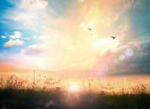 ενάντια ανασκόπησης μπλε σύννεφων πεδίων άσπρο σε wispy ουρανού φύσης χλόης πράσινο Στοκ Φωτογραφία