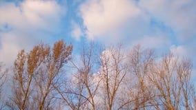 ενάντια στα δέντρα ουρανού φθινοπώρου απόθεμα βίντεο