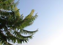 ενάντια στα μπλε δέντρα ο&upsilo απλό όμορφο υπόβαθρο στοκ φωτογραφίες