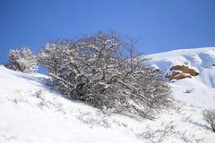 ενάντια στην μπλε όψη δέντρων χιονιού ουρανού κινηματογραφήσεων σε πρώτο πλάνο Στοκ εικόνες με δικαίωμα ελεύθερης χρήσης