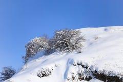 ενάντια στην μπλε όψη δέντρων χιονιού ουρανού κινηματογραφήσεων σε πρώτο πλάνο Στοκ Εικόνες