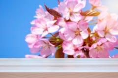 ενάντια στις λευκές κίτρινες νεολαίες άνοιξη λουλουδιών έννοιας ανασκόπησης Λουλούδια δέντρων κερασιών που θολώνονται στο υπόβαθρ στοκ εικόνες με δικαίωμα ελεύθερης χρήσης