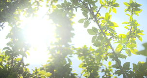 ενάντια στον ήλιο πρωινού φ απόθεμα βίντεο