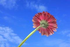 ενάντια στον κόκκινο ουρανό λουλουδιών ανασκόπησης Στοκ Εικόνες