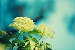ενάντια στον μπλε ουρανό λουλουδιών Στοκ φωτογραφία με δικαίωμα ελεύθερης χρήσης