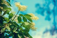 ενάντια στον μπλε ουρανό λουλουδιών Στοκ Εικόνα
