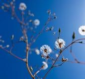 ενάντια στον μπλε ουρανό π Στοκ φωτογραφία με δικαίωμα ελεύθερης χρήσης