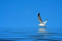 ενάντια στον μπλε φωτεινό &pi Στοκ εικόνα με δικαίωμα ελεύθερης χρήσης
