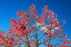 ενάντια στο δέντρο μπλε ο&ups στοκ φωτογραφία