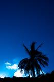 ενάντια στο δέντρο ουραν&omic Στοκ Φωτογραφία