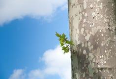 ενάντια στο δέντρο μπλε ο&ups Στοκ Εικόνα
