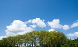 ενάντια στο δέντρο μπλε ο&ups Στοκ Φωτογραφίες