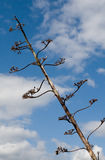 ενάντια στο δέντρο ουραν&omic Στοκ Εικόνες