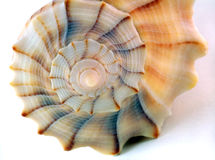 ενάντια στο λευκό θαλασσινών κοχυλιών λεπτομέρειας στοκ φωτογραφίες με δικαίωμα ελεύθερης χρήσης