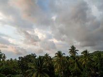 Ενάντια στο μπλε ουρανό και τα πολύχρωμα σύννεφα, κορώνες των τροπικών δέντρων στοκ φωτογραφία με δικαίωμα ελεύθερης χρήσης