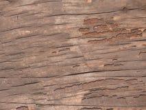 ενάντια στο ξηρό παλαιό δέντρο ουρανού Στοκ Εικόνες