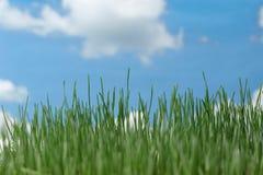 ενάντια στο φυσικό ουρανό χλόης στοκ εικόνες με δικαίωμα ελεύθερης χρήσης
