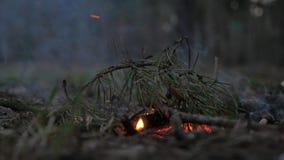 Ενάρξεις πυρκαγιάς στο δασικό εμπρησμό στο πάρκο Θέτοντας πυρκαγιά στη φύση, χλωρίδα, πανίδα Ξηρός κλάδος puttin αγοριών στην πυρ φιλμ μικρού μήκους