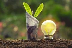 Ενέργεια - ανάπτυξη λαμπών φωτός και δέντρων αποταμίευσης με το τραπεζογραμμάτιο στο natur Στοκ Εικόνες