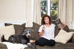 Ενήλικη θηλυκή TV προσοχής με τα σκυλιά στον καναπέ στοκ εικόνα με δικαίωμα ελεύθερης χρήσης