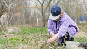 Ενήλικος κηπουρός γυναικών που φυτεύει το θάμνο φρούτων εργαζόμενος στο ναυπηγείο κήπων φιλμ μικρού μήκους