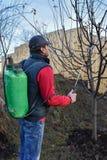 Ενήλικα ψεκάζοντας οπωρωφόρα δέντρα ατόμων Στοκ Εικόνα