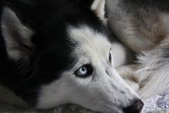 Ενήλικος θηλυκός γεροδεμένος Στοκ φωτογραφία με δικαίωμα ελεύθερης χρήσης