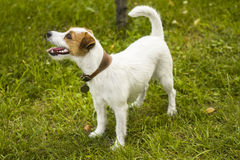 Ενήλικο σκυλί υπαίθρια στοκ φωτογραφία με δικαίωμα ελεύθερης χρήσης