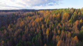 Εναέρια άποψη ένα ζωηρόχρωμο δάσος στην πτώση απόθεμα βίντεο