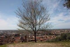 Εναέρια άποψη από έναν λόφο ένα ήρεμο, πράσινο, ήρεμο και ειρηνικό δημόσιο πάρκο ένας απόμερος πάγκος, ένα δέντρο και μια άποψη τ στοκ εικόνες
