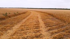 Εναέρια άποψη από έναν μερικώς κομμένο ώριμο τομέα σίτου Πανοραμική μετακίνηση πέρα από το σίτο Αγροτική παραγωγή του ψωμιού μέσα φιλμ μικρού μήκους