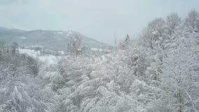 Εναέρια άποψη δάσους που καλύπτεται του χειμερινού με το χιόνι Χειμερινό αλπικό λιβάδι - άσπροι λόφοι που καλύπτονται με τη δασικ απόθεμα βίντεο