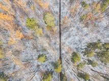 Εναέρια άποψη ενός δάσους το φθινόπωρο Νέο χιόνι στο δάσος μετά από τις πρώτες χιονοπτώσεις Στοκ Εικόνα