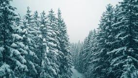 Εναέρια άποψη ενός ζεύγους που στο χιονώδες χειμερινό δάσος φιλμ μικρού μήκους