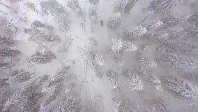 Εναέρια άποψη ενός οχήματος για το χιόνι που γύροι στη μέση ενός μυθικού χιονώδους δάσους απόθεμα βίντεο