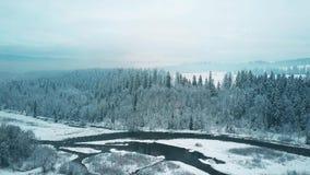 Εναέρια άποψη ενός χιονώδους δάσους και ενός μικρού ποταμού το χειμώνα Τα βουνά Tatra, Πολωνία απόθεμα βίντεο