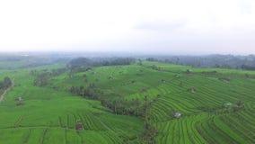 Εναέρια άποψη: καταπληκτικοί τομείς ρυζιού στο Μπαλί απόθεμα βίντεο