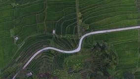 Εναέρια άποψη: καταπληκτικοί τομείς ρυζιού στο Μπαλί φιλμ μικρού μήκους