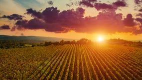 Εναέρια άποψη κηφήνων των τομέων wineyards από την κορυφή στο ηλιοβασίλεμα Εναέρια έννοια άποψης κηφήνων στοκ εικόνα