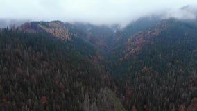 Εναέρια άποψη μήκους σε πόδηα κηφήνων: πτήση πέρα από το βουνό φθινοπώρου με τα δάση και τους τομείς Καρπάθια βουνά, Ουκρανία, Ευ απόθεμα βίντεο