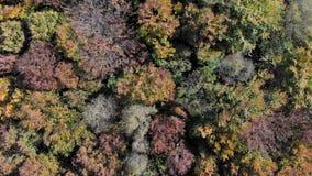 Εναέρια άποψη μήκους σε πόδηα Πτήση πέρα από τα βουνά φθινοπώρου με τα δάση, τα λιβάδια και τους λόφους στο μαλακό φως ηλιοβασιλέ φιλμ μικρού μήκους